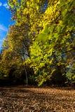 Parque del otoño, hojas del amarillo Fotografía de archivo libre de regalías
