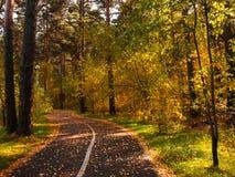 Parque del otoño, paisaje hermoso del otoño del bosque Callejón en el parque fotografía de archivo libre de regalías