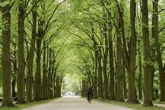 Parque del palacio de Esterhazy Fotos de archivo libres de regalías