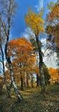 Parque del señorío de Uzutrakio Fotos de archivo libres de regalías