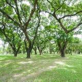 Parque del verano, árboles imagen de archivo libre de regalías