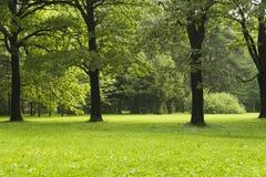 Parque del verano en la madrugada Fotos de archivo libres de regalías