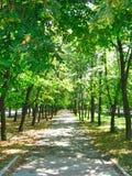 Parque del verano en los fulgores Imagenes de archivo