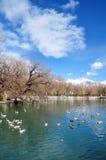 Parque del Zong-jiao-lu-kang de la primavera con los pájaros Imagen de archivo libre de regalías