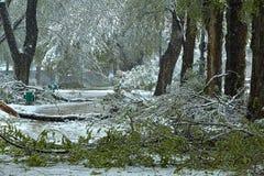 Parque después de la nieve Foto de archivo libre de regalías