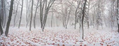 Parque después de una tormenta de la nieve Foto de archivo