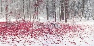 Parque después de una tormenta de la nieve Fotografía de archivo