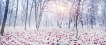Parque después de una tormenta de la nieve Imagen de archivo libre de regalías