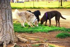Parque do cão Fotos de Stock Royalty Free