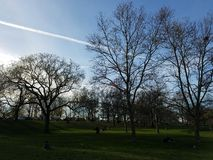 Parque do céu da noite da árvore do ramo da skyline Imagens de Stock Royalty Free