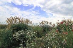 Parque do céu no verão de Seoul imagens de stock royalty free