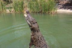 Parque do crocodilo Fotografia de Stock Royalty Free