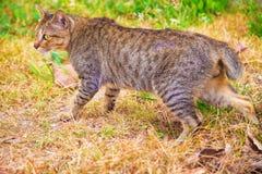 parque do gato em público Imagem de Stock