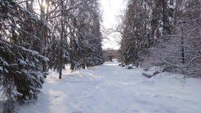 Parque do inverno Árvores na neve foto de stock royalty free