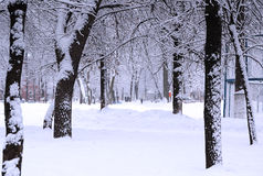 Parque do inverno Fotos de Stock Royalty Free