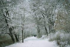 Parque do inverno Fotografia de Stock Royalty Free