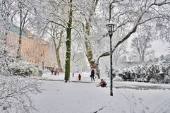 Parque do inverno Fotos de Stock