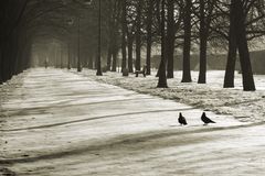 Parque do inverno Imagem de Stock
