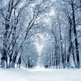 Parque do inverno, cenário imagens de stock royalty free