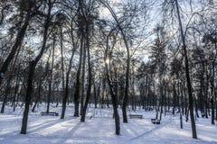 Parque do inverno em Kiev Fotografia de Stock Royalty Free