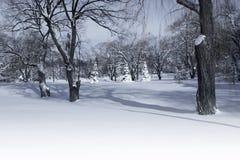 Parque do inverno na manhã Foto de Stock Royalty Free