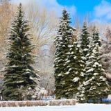 Parque do inverno na neve Imagens de Stock Royalty Free