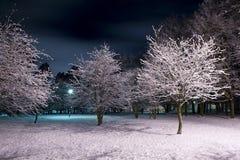 Parque do inverno na noite Fotografia de Stock Royalty Free