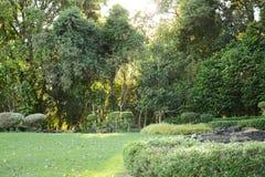 Parque do jardim da árvore Fotos de Stock Royalty Free