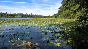 Parque do lago deer, Metrotown Burnaby Fotos de Stock Royalty Free