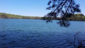 Parque do lago do bosque do carvalho Foto de Stock Royalty Free