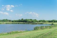 Parque do lago hillside com os juncos e os wildflowers que florescem perto de Dallas, Texas imagem de stock