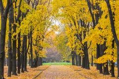 Parque do outono Fotografia de Stock
