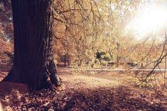 Parque do outono Fotografia de Stock Royalty Free