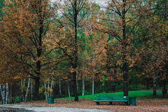 Parque do outono com banco Foto de Stock Royalty Free