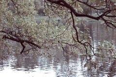 Parque do outono com o rio toning fotos de stock royalty free