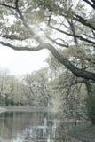 Parque do outono com o rio toning imagens de stock royalty free