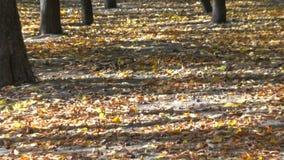 Parque do outono da cidade filme