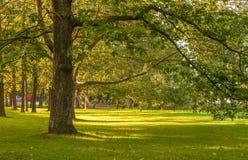 Parque do outono em Helsínquia Foto de Stock Royalty Free