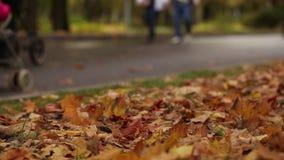 Parque do outono exterior vídeos de arquivo