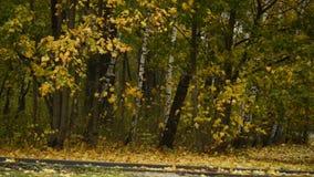 Parque do outono na chuva Modo melancólico vídeos de arquivo