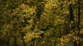 Parque do outono na chuva Modo melancólico video estoque