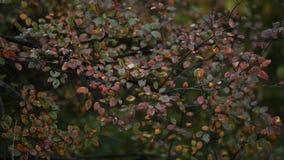 Parque do outono na chuva Modo melancólico filme