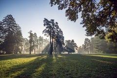 Parque do outono na manhã foto de stock