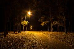 Parque do outono na noite Luzes de incandescência Estrada com folhas de outono fotografia de stock