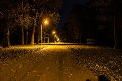Parque do outono na noite Luzes de incandescência Estrada com folhas de outono imagens de stock royalty free
