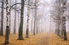 Parque do outono no tempo da névoa foto de stock