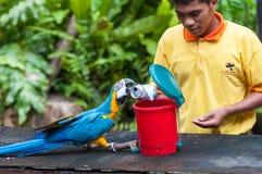 Parque do pássaro do quilolitro Fotografia de Stock