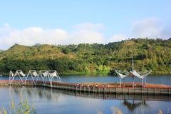Parque do pantanal Imagens de Stock