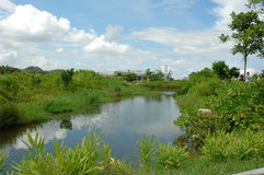 Parque do pantanal Fotos de Stock