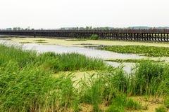 Parque do pantanal Foto de Stock